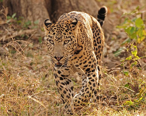 Vehicle Safari at Kabini | Orange County