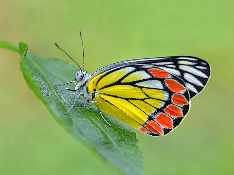 The Painted Lady of Kabini