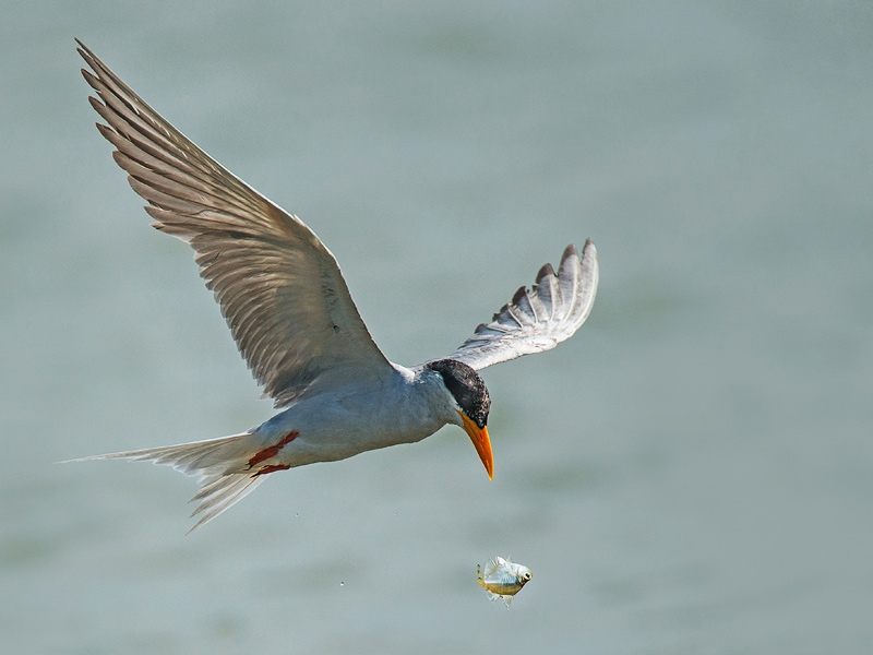 About Tern!